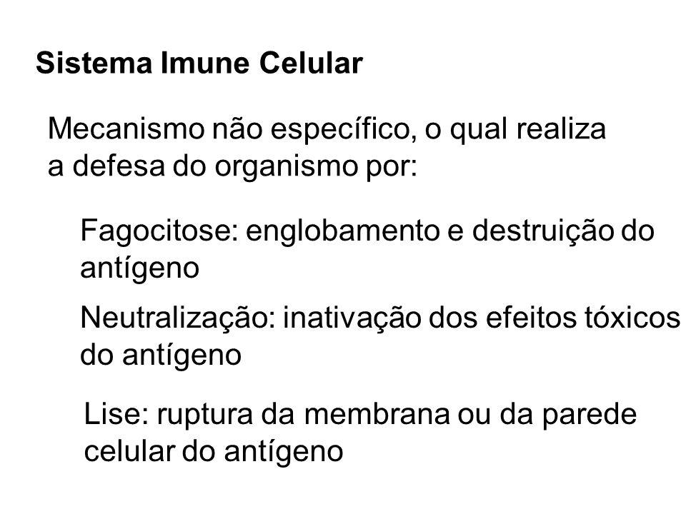 Sistema Imune Celular Mecanismo não específico, o qual realiza. a defesa do organismo por: Fagocitose: englobamento e destruição do.