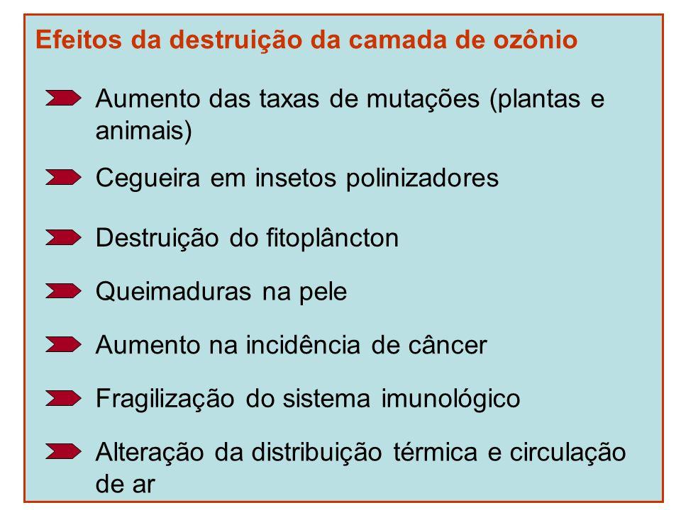 Efeitos da destruição da camada de ozônio