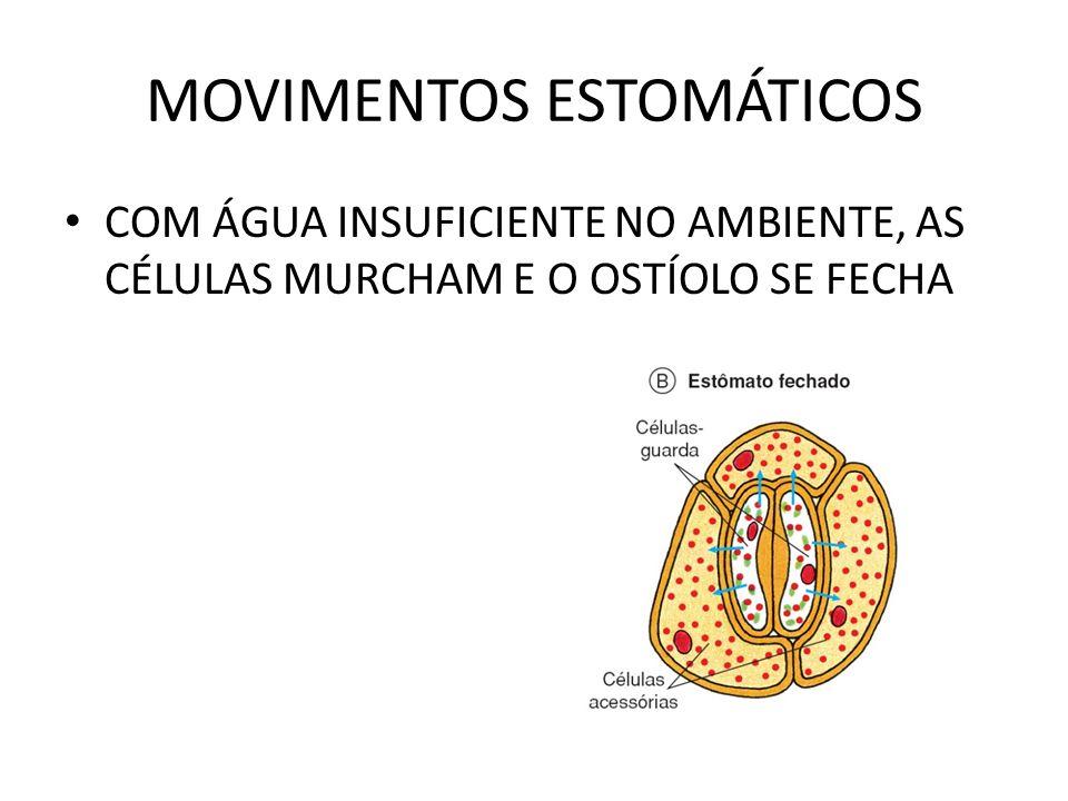 MOVIMENTOS ESTOMÁTICOS