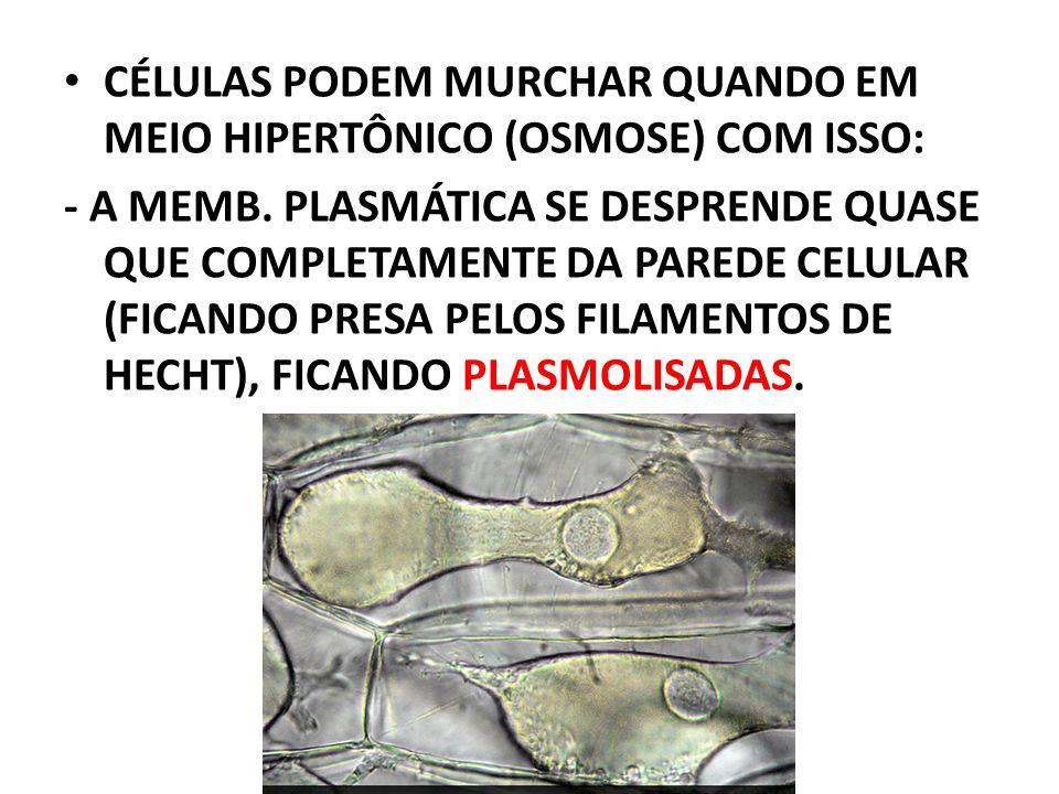 CÉLULAS PODEM MURCHAR QUANDO EM MEIO HIPERTÔNICO (OSMOSE) COM ISSO: