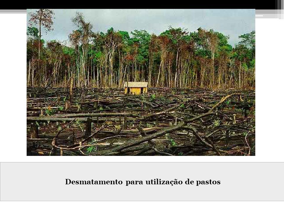 Desmatamento para utilização de pastos