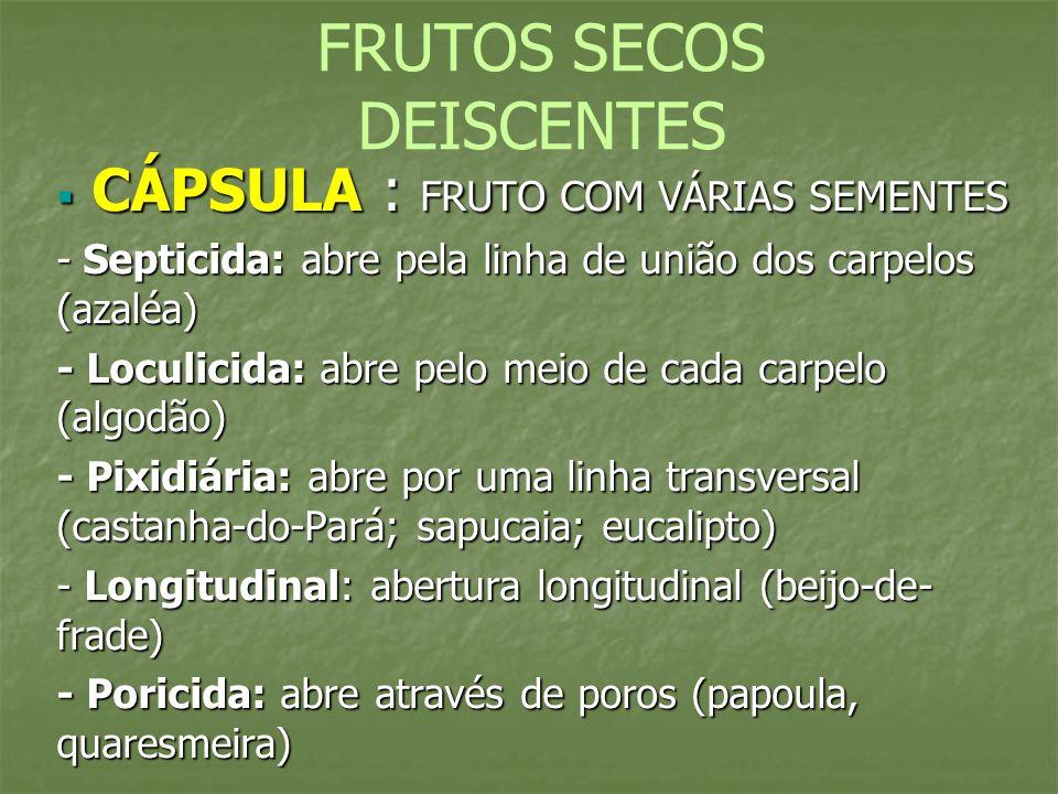 FRUTOS SECOS DEISCENTES