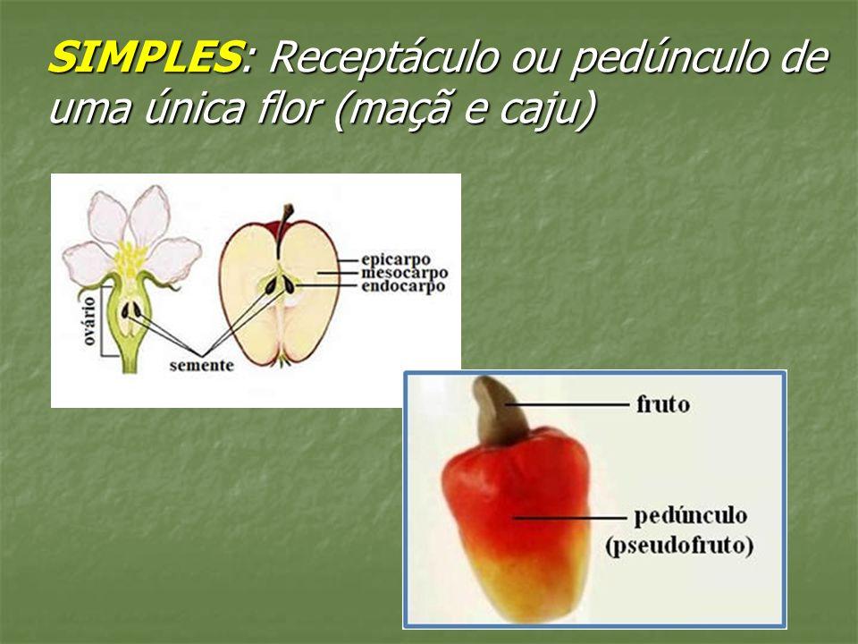 SIMPLES: Receptáculo ou pedúnculo de uma única flor (maçã e caju)