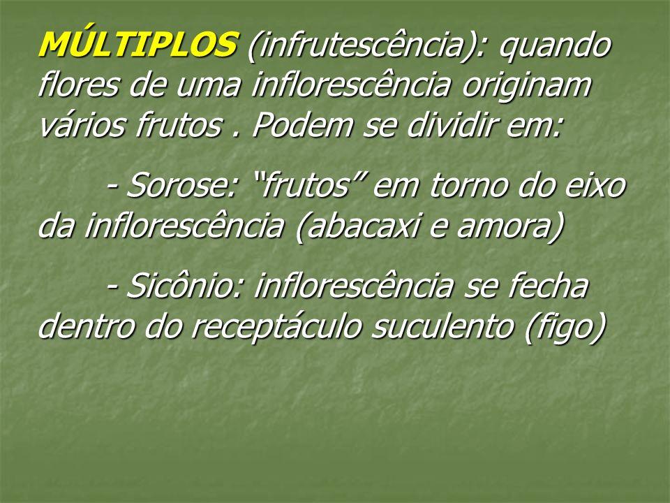 MÚLTIPLOS (infrutescência): quando flores de uma inflorescência originam vários frutos . Podem se dividir em: