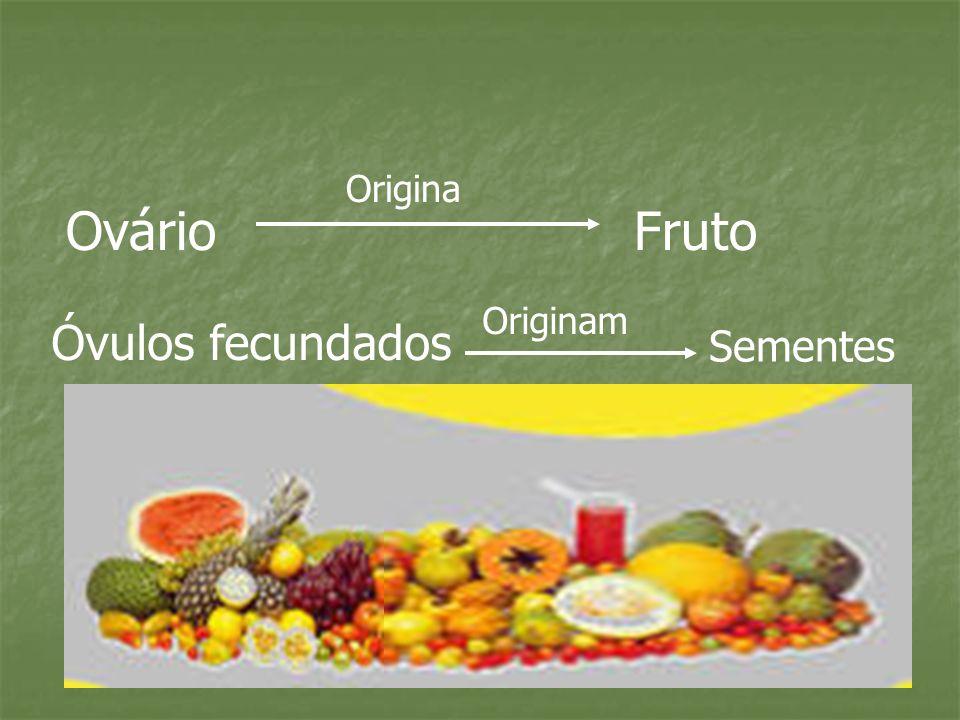 Origina Ovário Fruto Originam Óvulos fecundados Sementes