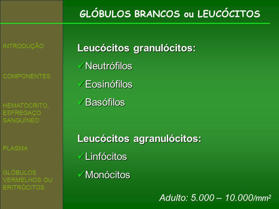 Leucócitos granulócitos: Neutrófilos Eosinófilos Basófilos