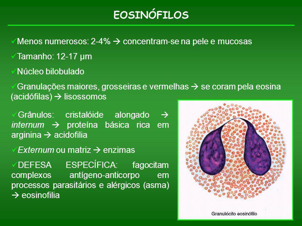 EOSINÓFILOS Menos numerosos: 2-4%  concentram-se na pele e mucosas