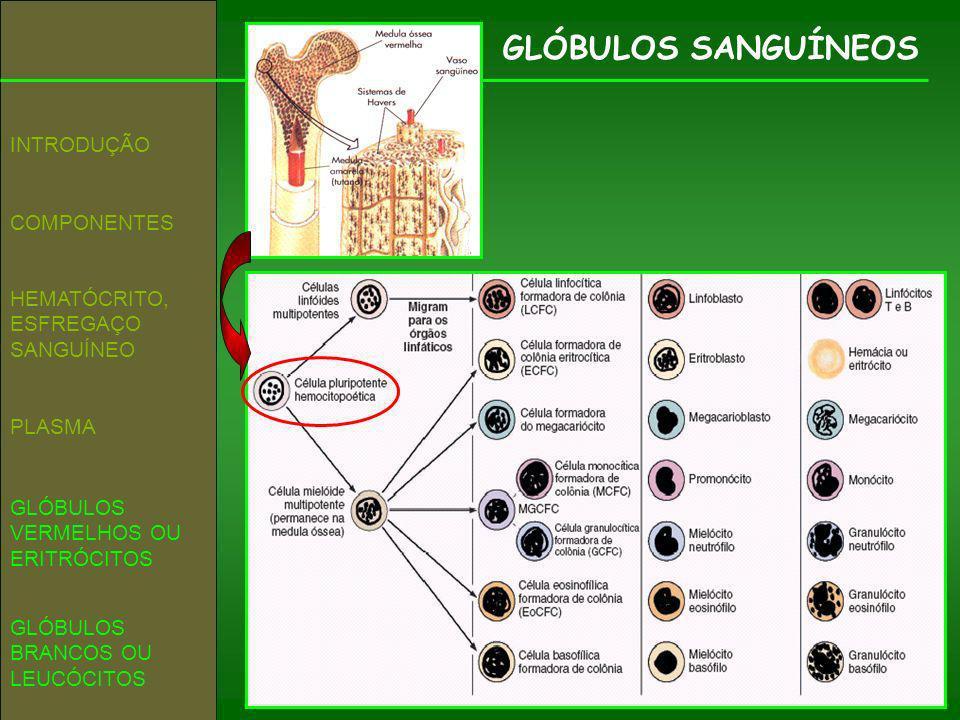 GLÓBULOS SANGUÍNEOS INTRODUÇÃO COMPONENTES