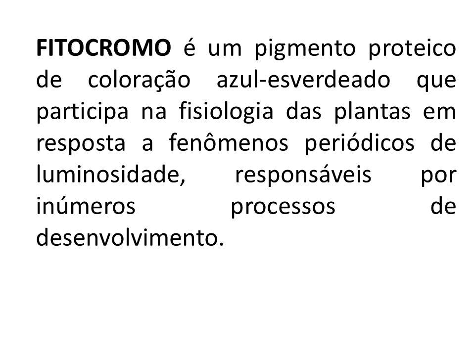 FITOCROMO é um pigmento proteico de coloração azul-esverdeado que participa na fisiologia das plantas em resposta a fenômenos periódicos de luminosidade, responsáveis por inúmeros processos de desenvolvimento.