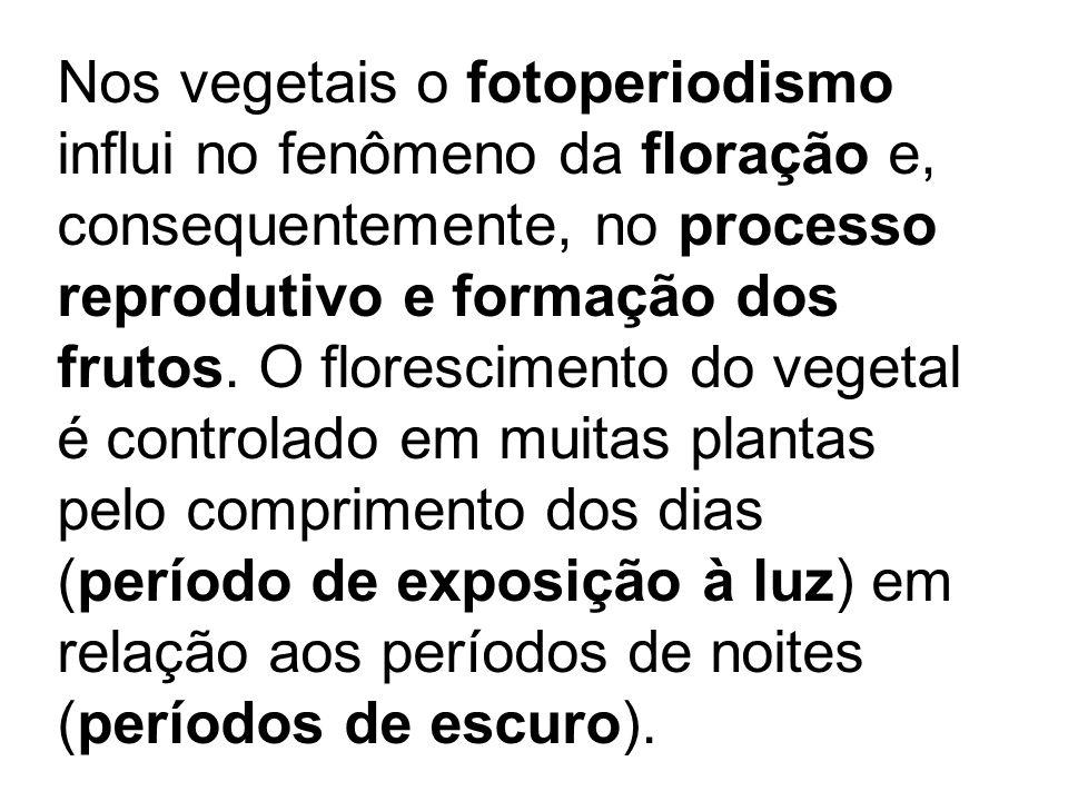 Nos vegetais o fotoperiodismo influi no fenômeno da floração e, consequentemente, no processo reprodutivo e formação dos frutos. O florescimento do vegetal é controlado em muitas plantas pelo comprimento dos dias (período de exposição à luz) em relação aos períodos de noites (períodos de escuro).
