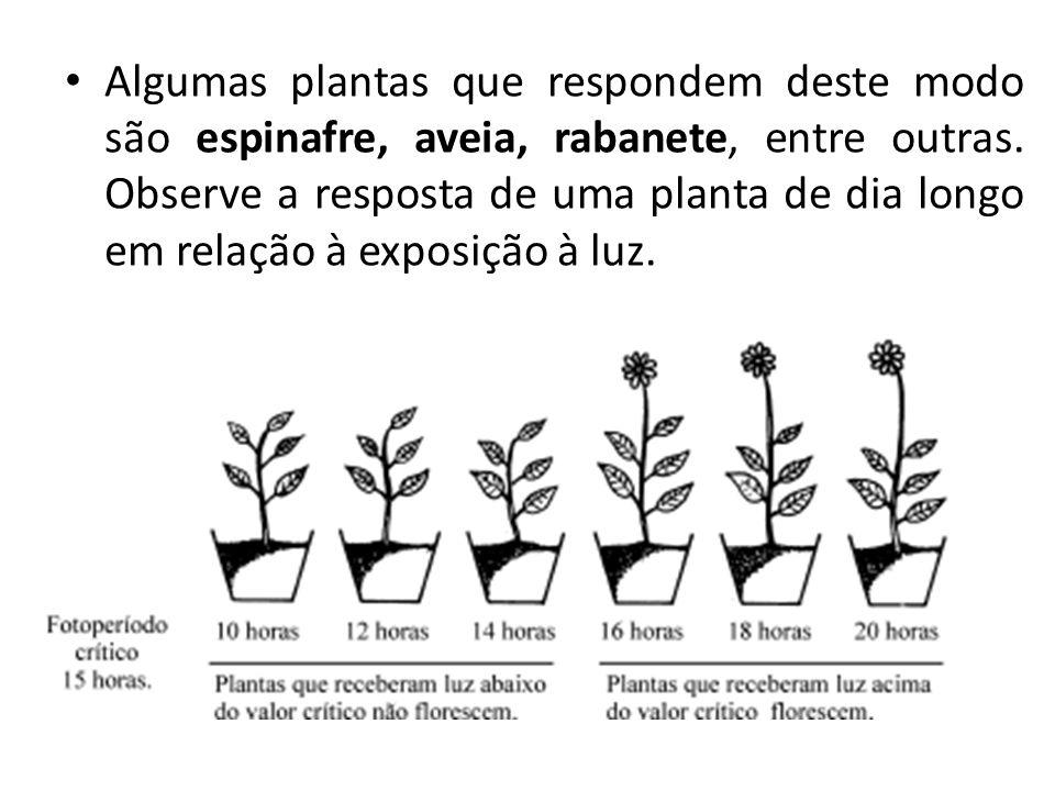 Algumas plantas que respondem deste modo são espinafre, aveia, rabanete, entre outras.