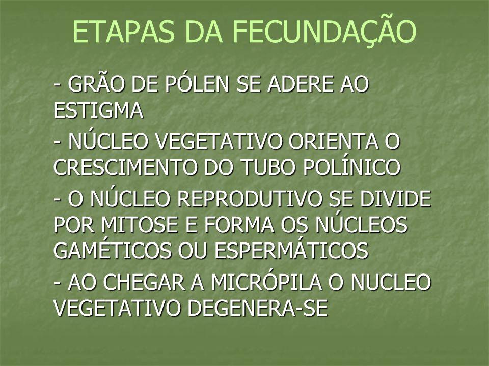 ETAPAS DA FECUNDAÇÃO - GRÃO DE PÓLEN SE ADERE AO ESTIGMA
