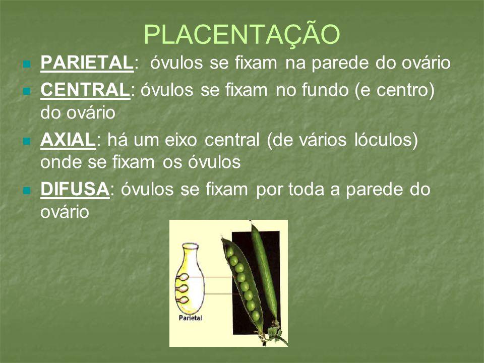 PLACENTAÇÃO PARIETAL: óvulos se fixam na parede do ovário