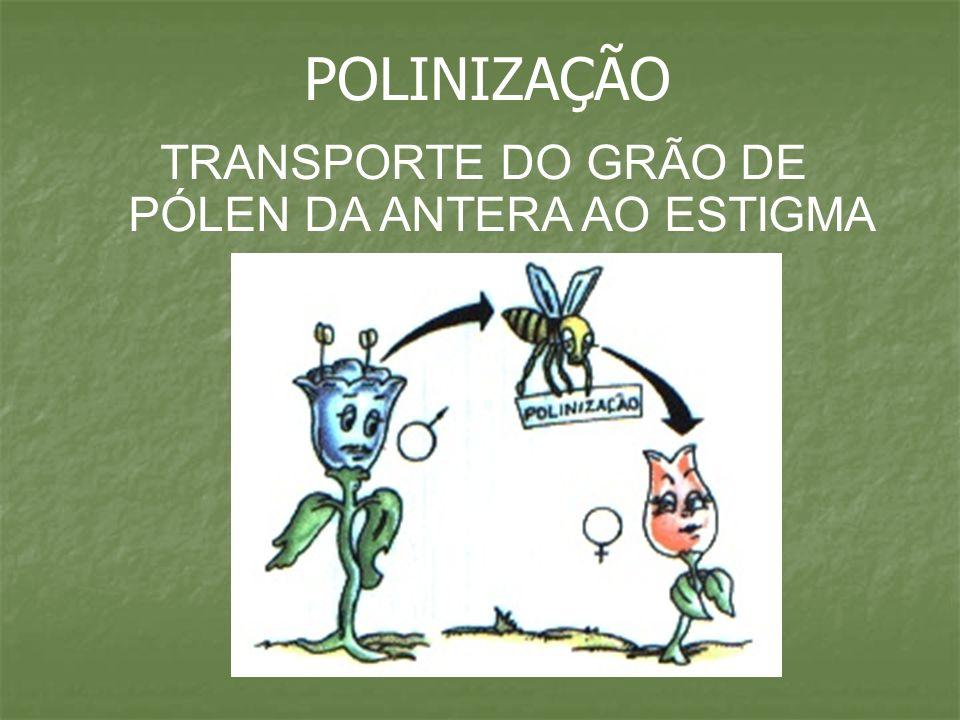 TRANSPORTE DO GRÃO DE PÓLEN DA ANTERA AO ESTIGMA