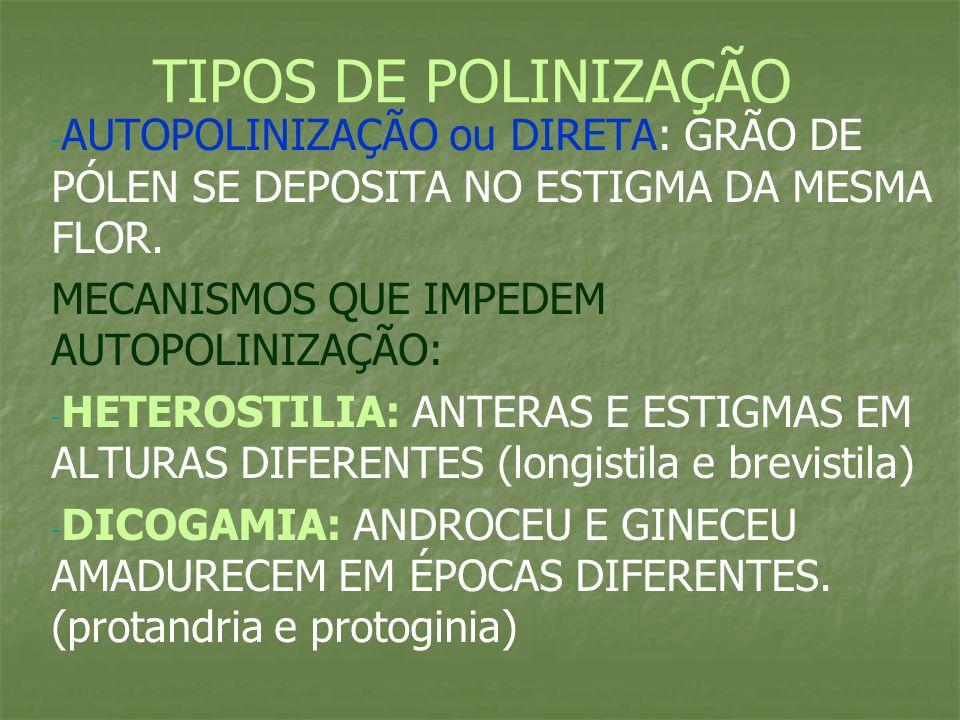 TIPOS DE POLINIZAÇÃO AUTOPOLINIZAÇÃO ou DIRETA: GRÃO DE PÓLEN SE DEPOSITA NO ESTIGMA DA MESMA FLOR.