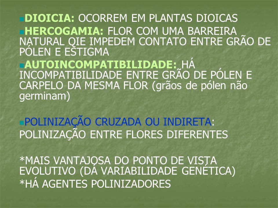 DIOICIA: OCORREM EM PLANTAS DIOICAS