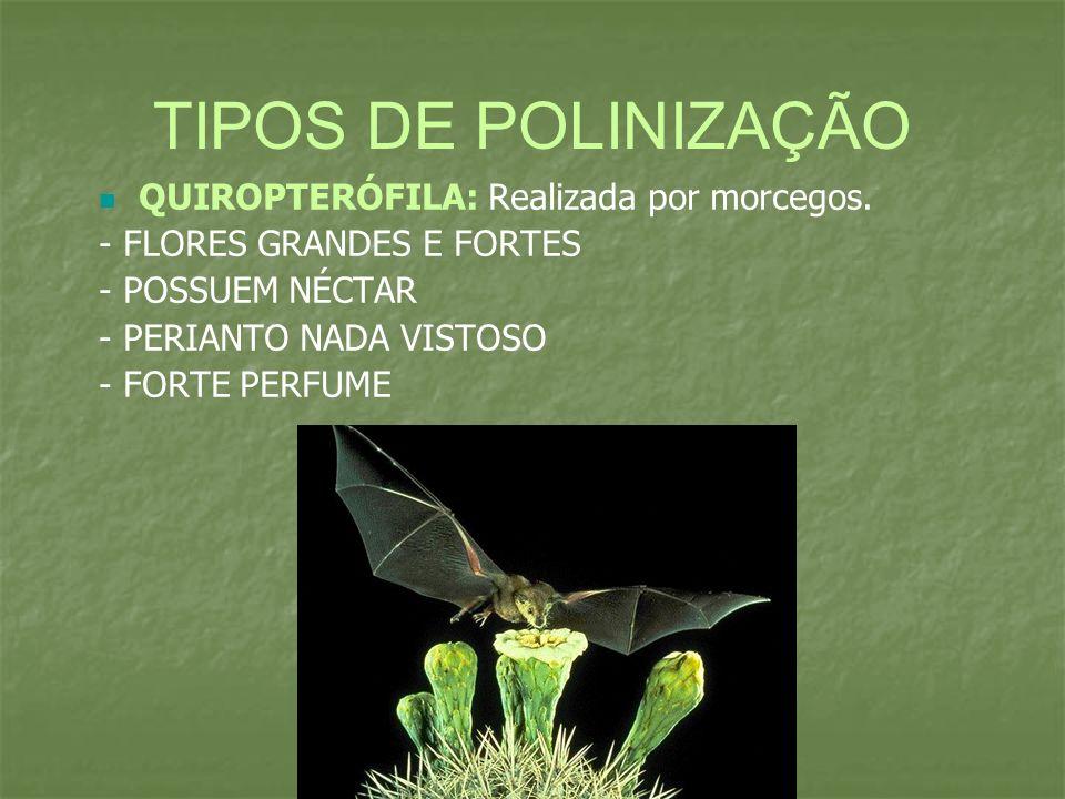 TIPOS DE POLINIZAÇÃO QUIROPTERÓFILA: Realizada por morcegos.