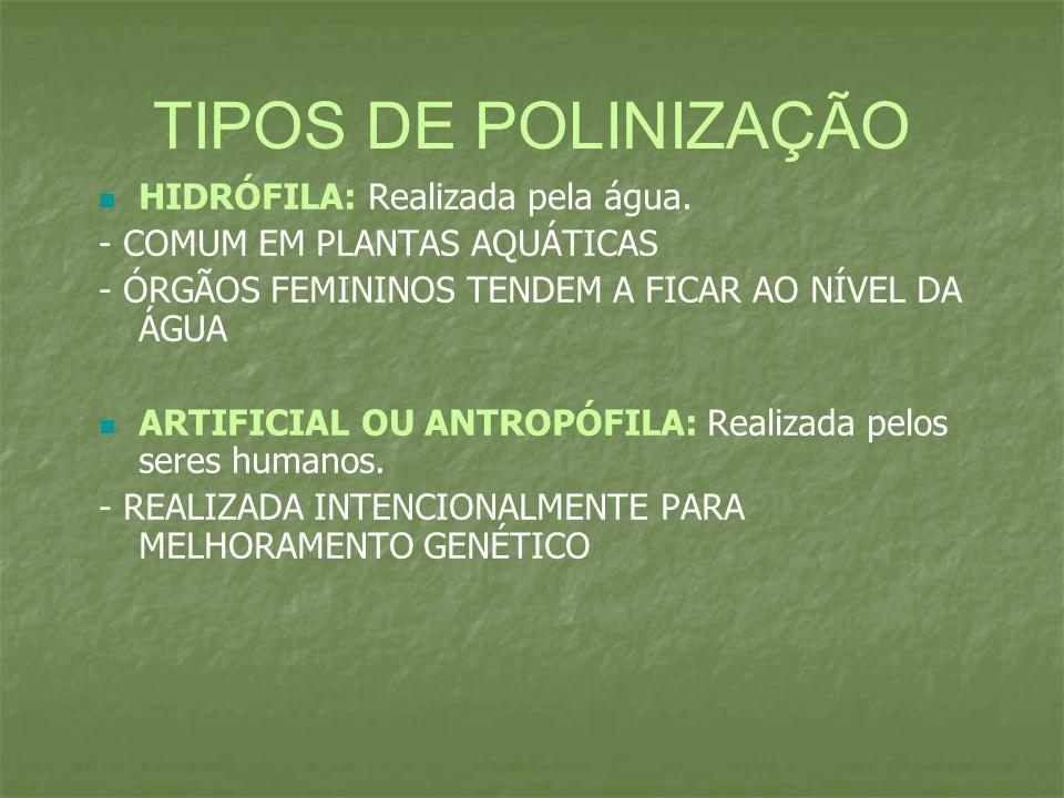 TIPOS DE POLINIZAÇÃO HIDRÓFILA: Realizada pela água.