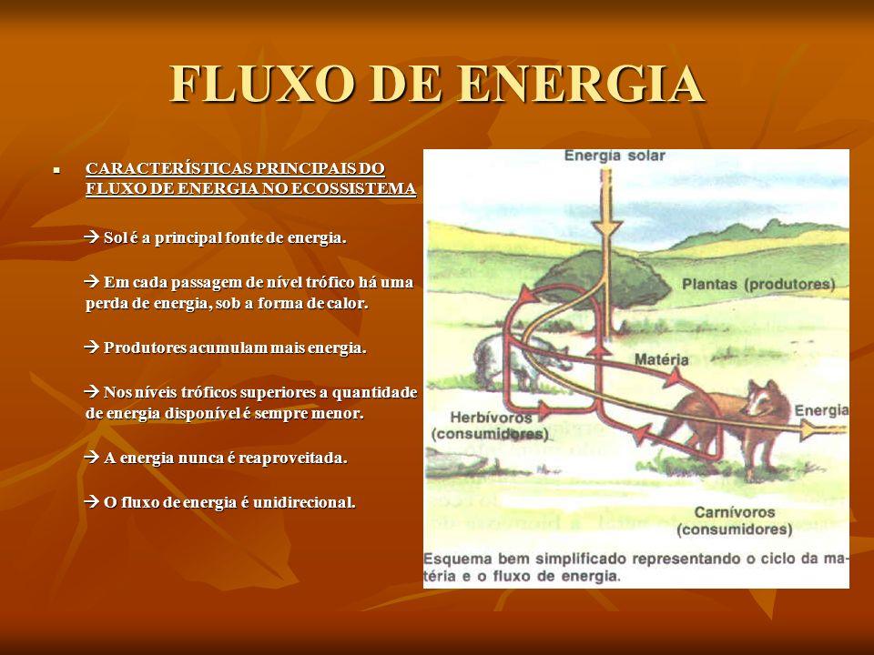 FLUXO DE ENERGIA CARACTERÍSTICAS PRINCIPAIS DO FLUXO DE ENERGIA NO ECOSSISTEMA.  Sol é a principal fonte de energia.