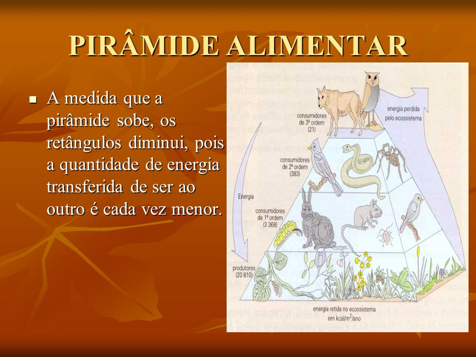 PIRÂMIDE ALIMENTAR A medida que a pirâmide sobe, os retângulos diminui, pois a quantidade de energia transferida de ser ao outro é cada vez menor.
