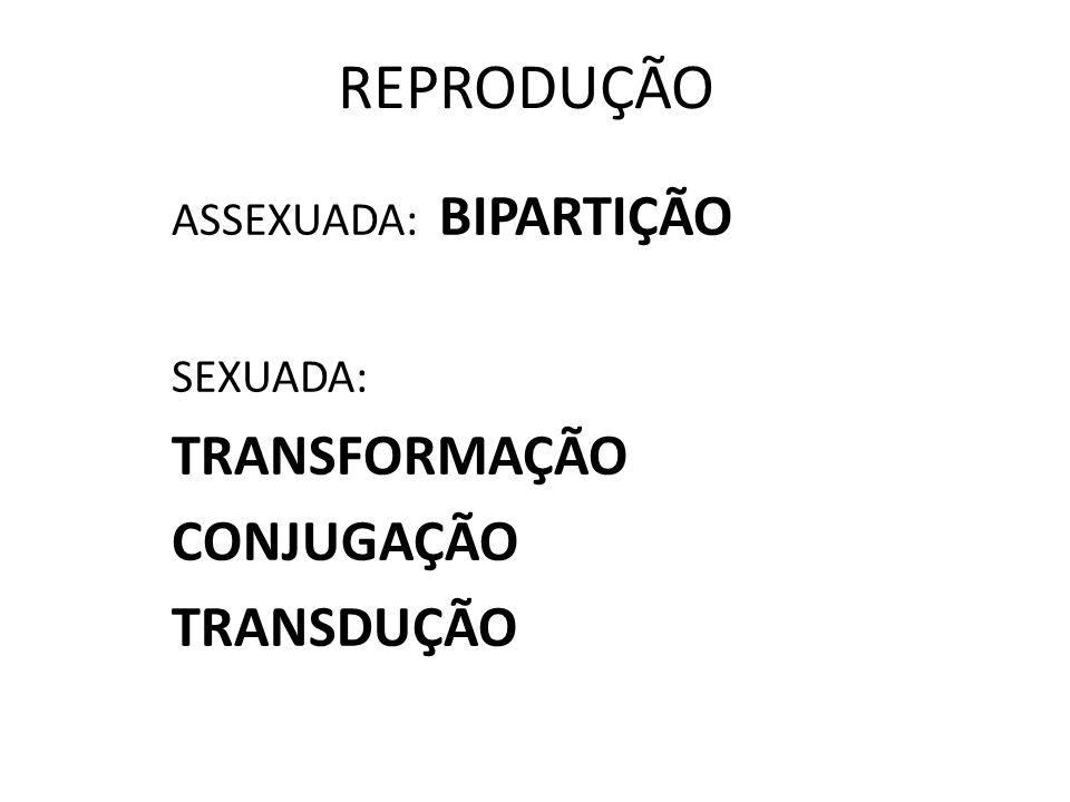 ASSEXUADA: BIPARTIÇÃO SEXUADA: TRANSFORMAÇÃO CONJUGAÇÃO TRANSDUÇÃO