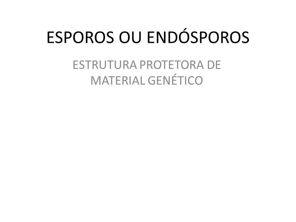 ESTRUTURA PROTETORA DE MATERIAL GENÉTICO