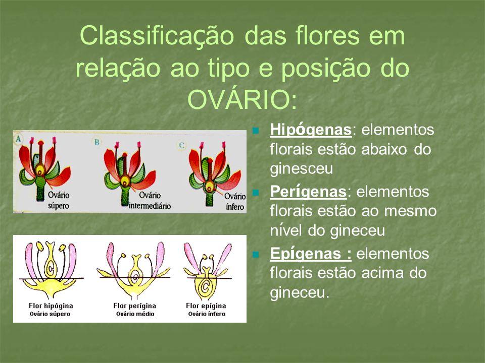 Classificação das flores em relação ao tipo e posição do OVÁRIO: