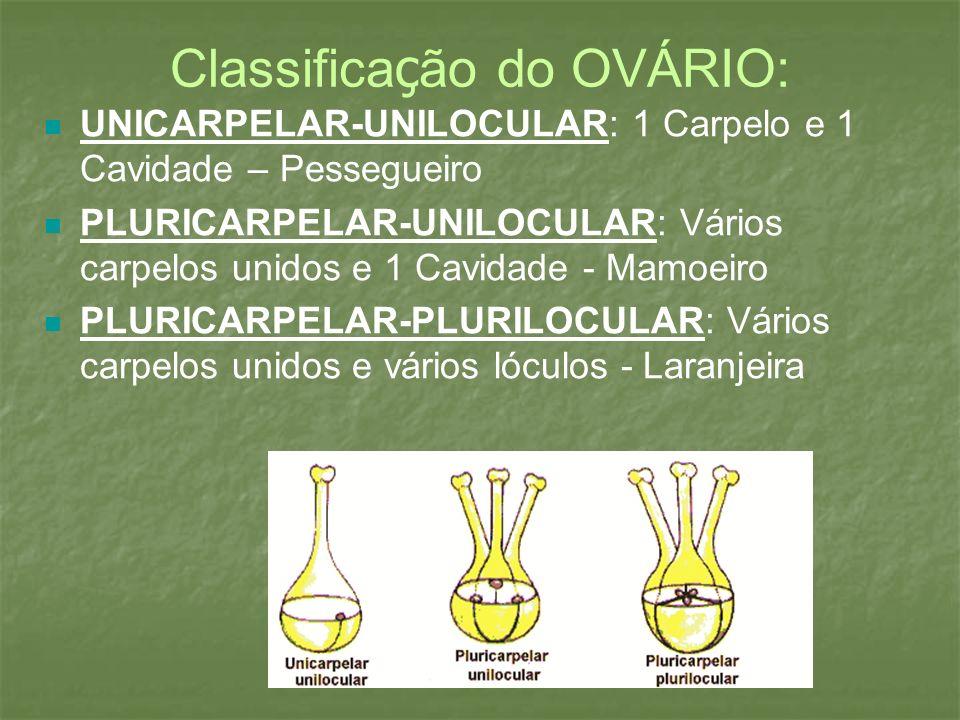 Classificação do OVÁRIO: