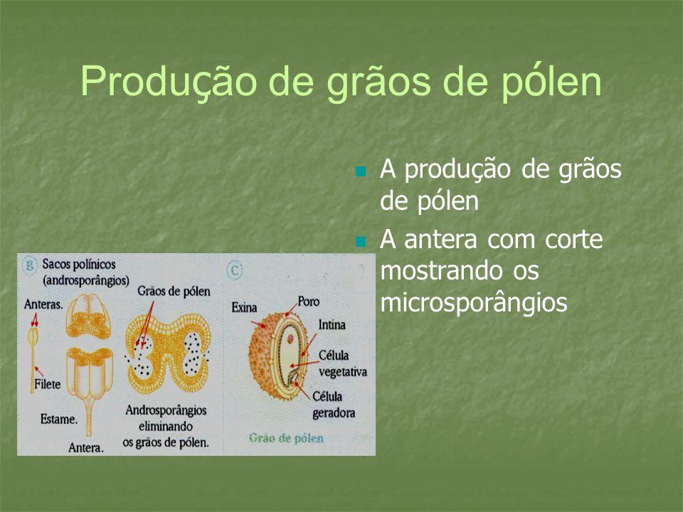 Produção de grãos de pólen