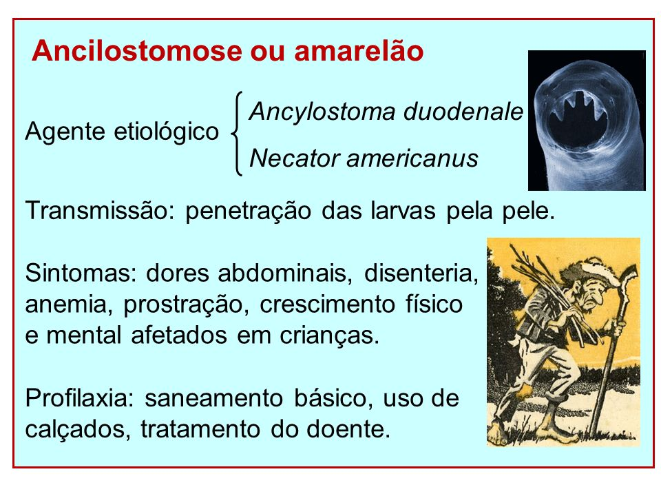Ancilostomose ou amarelão