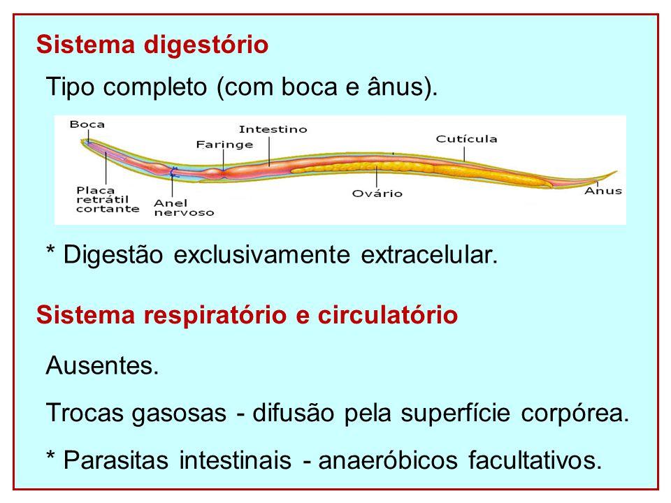 Sistema digestório Tipo completo (com boca e ânus). * Digestão exclusivamente extracelular. Sistema respiratório e circulatório.
