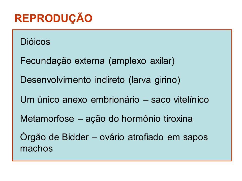 REPRODUÇÃO Dióicos Fecundação externa (amplexo axilar)