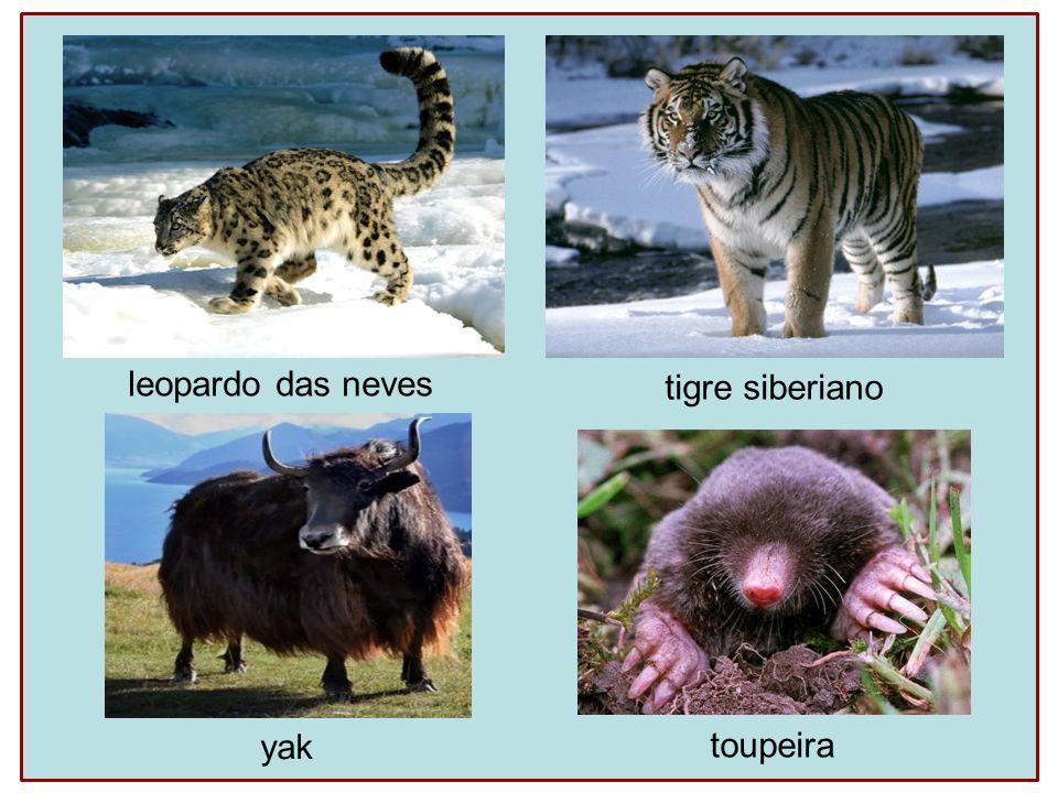leopardo das neves tigre siberiano yak toupeira