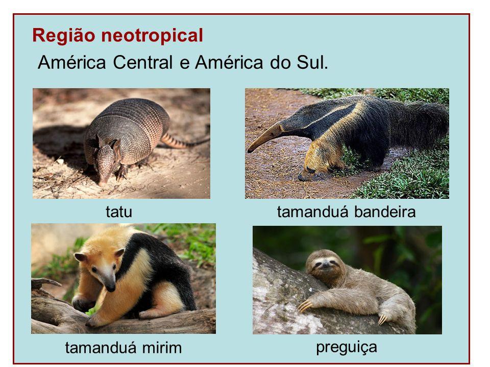 América Central e América do Sul.