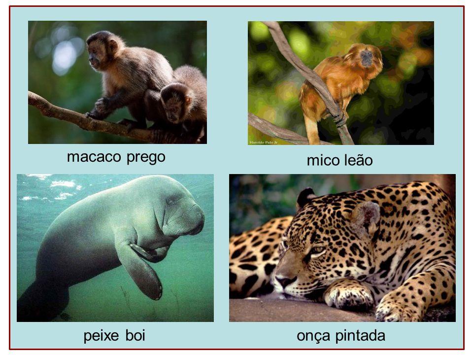 macaco prego mico leão peixe boi onça pintada