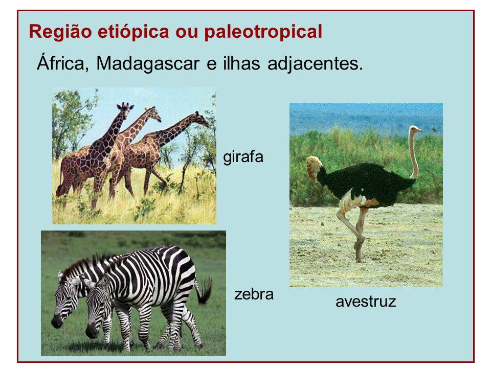 Região etiópica ou paleotropical