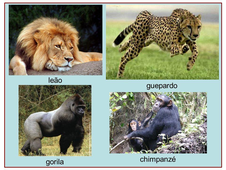 leão guepardo gorila chimpanzé