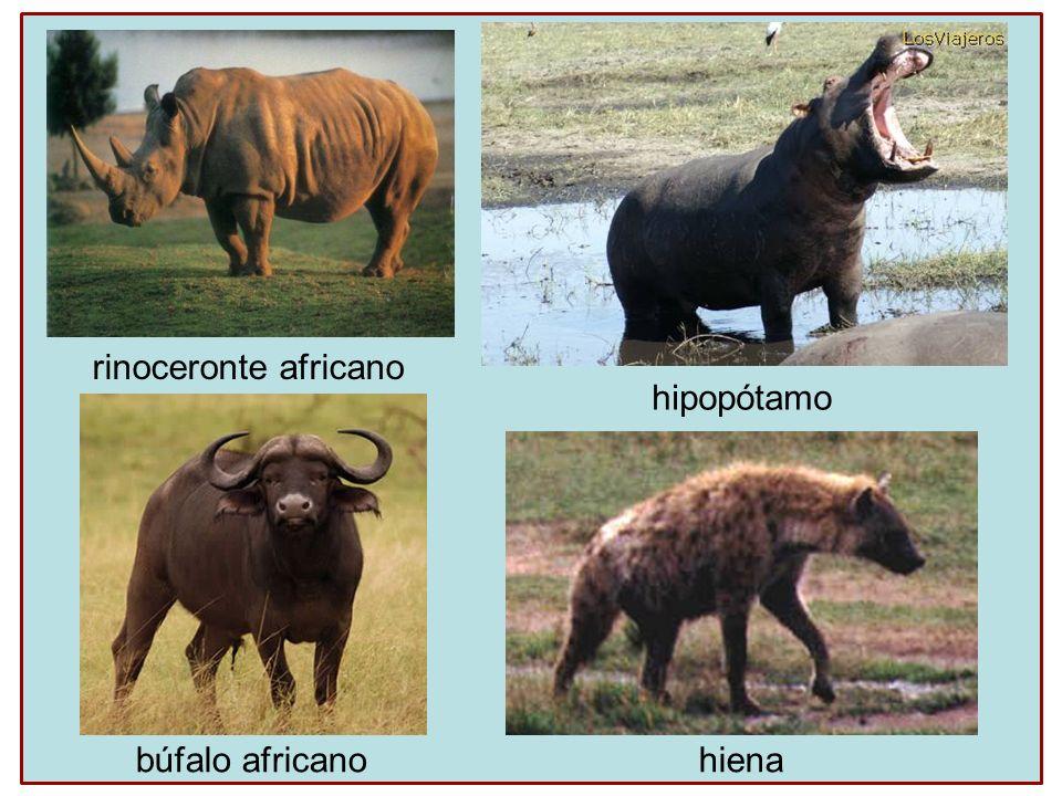 rinoceronte africano hipopótamo búfalo africano hiena
