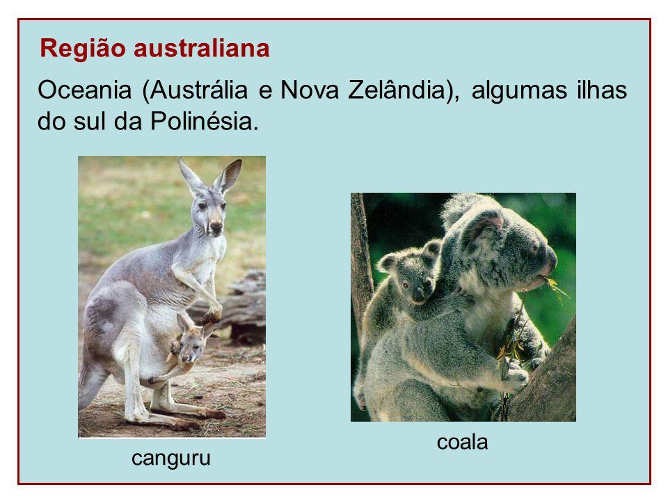 Oceania (Austrália e Nova Zelândia), algumas ilhas