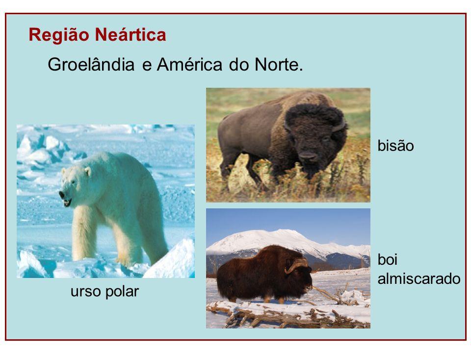 Groelândia e América do Norte.