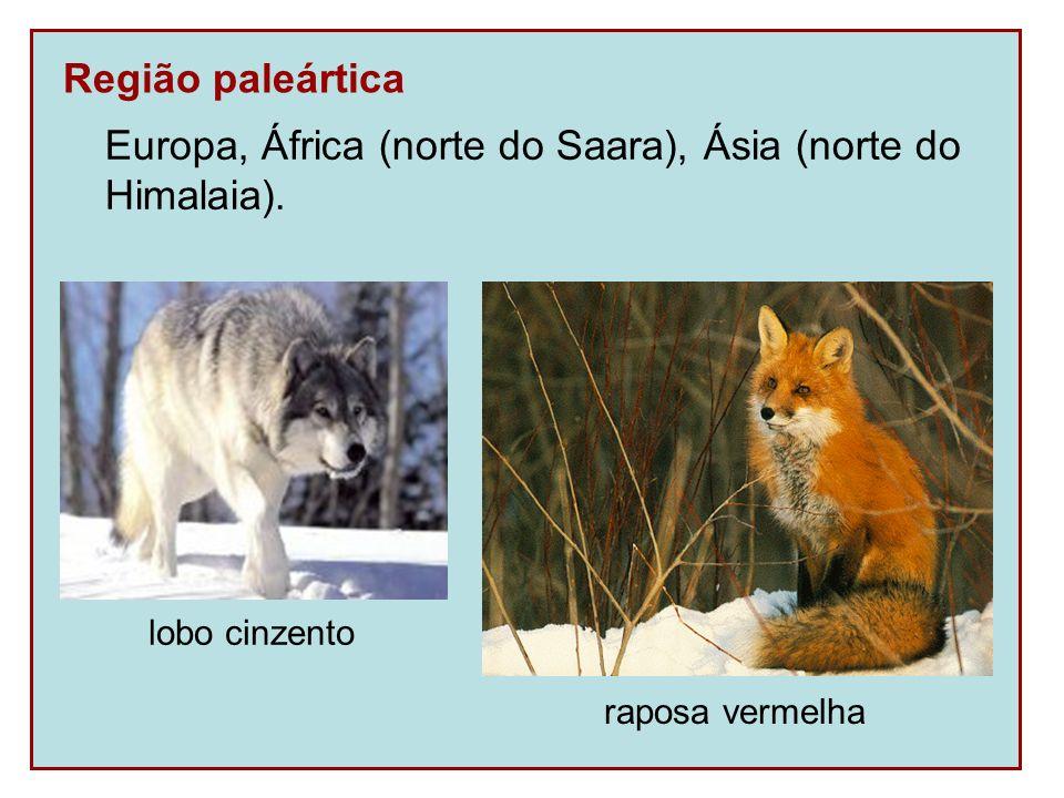 Europa, África (norte do Saara), Ásia (norte do Himalaia).