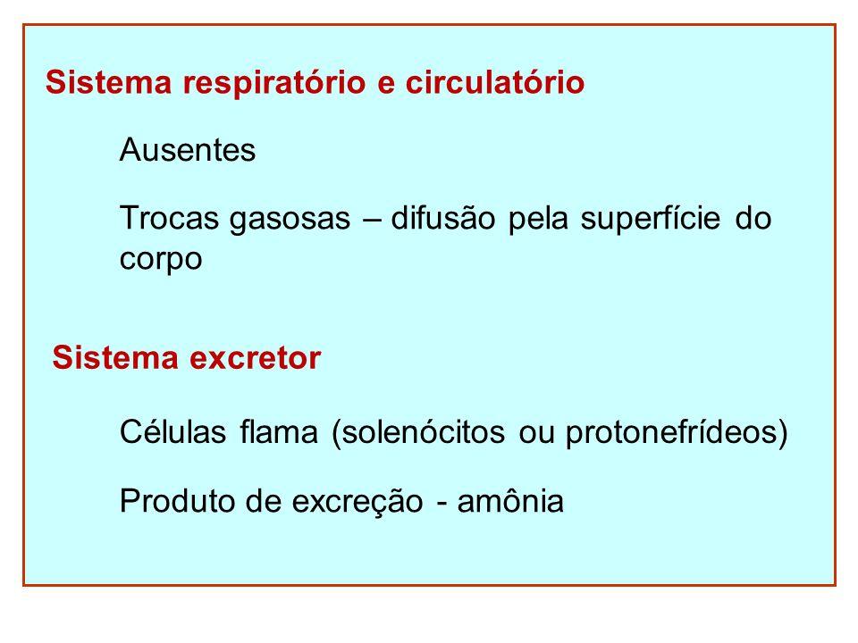 Sistema respiratório e circulatório