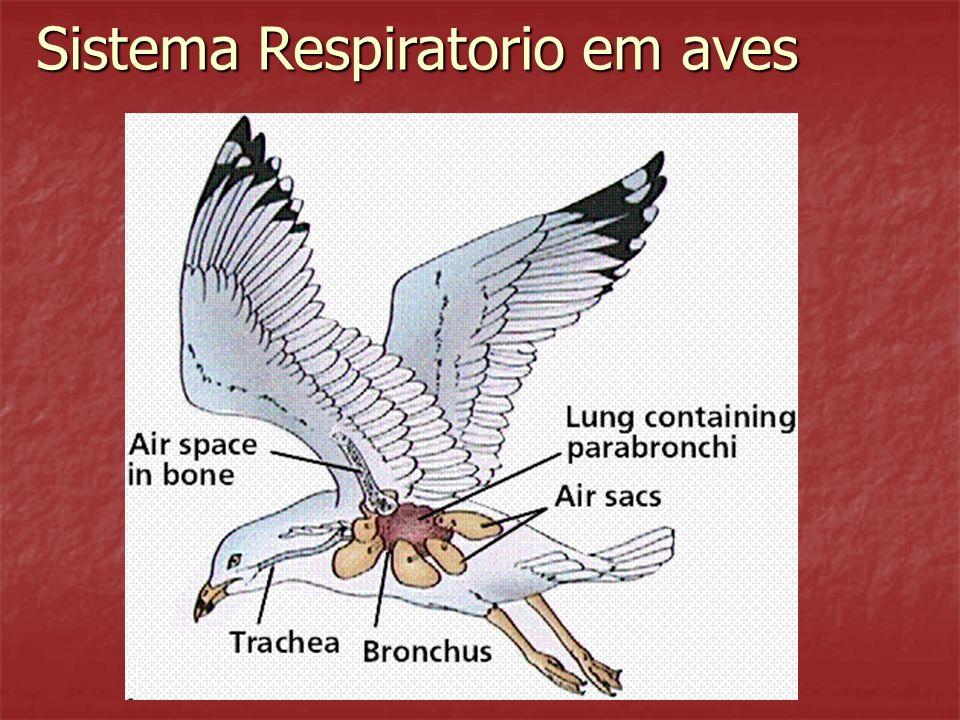 Sistema Respiratorio em aves