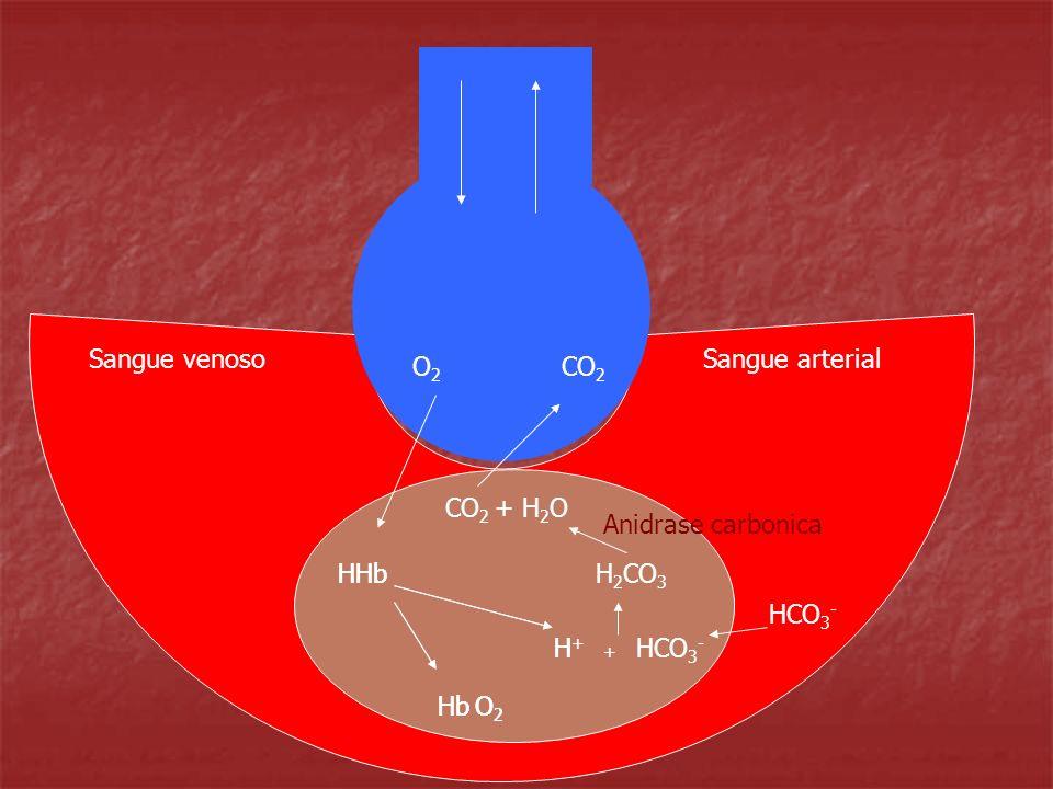 Sangue venosoSangue arterial. O2. CO2. CO2 + H2O. Anidrase carbonica. HHb. HHb. H2CO3. HCO3- H+ H. HCO3-