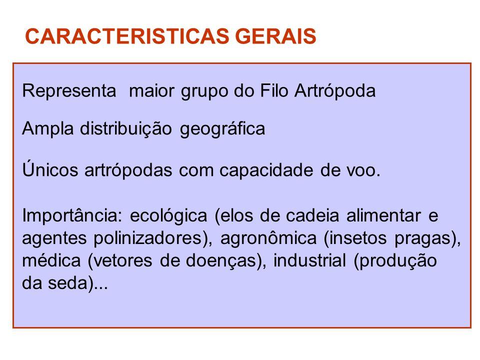 CARACTERISTICAS GERAIS