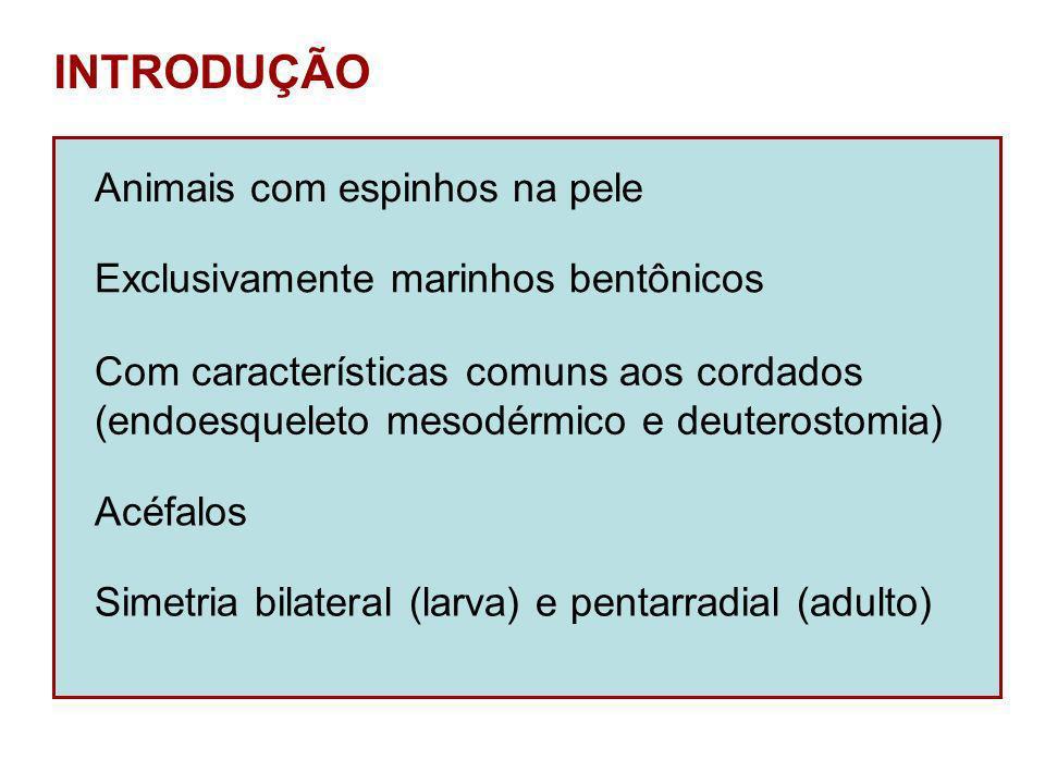 INTRODUÇÃO Animais com espinhos na pele