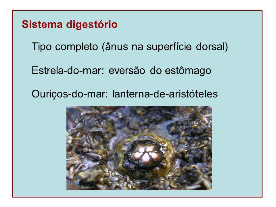 Sistema digestório Tipo completo (ânus na superfície dorsal) Estrela-do-mar: eversão do estômago.
