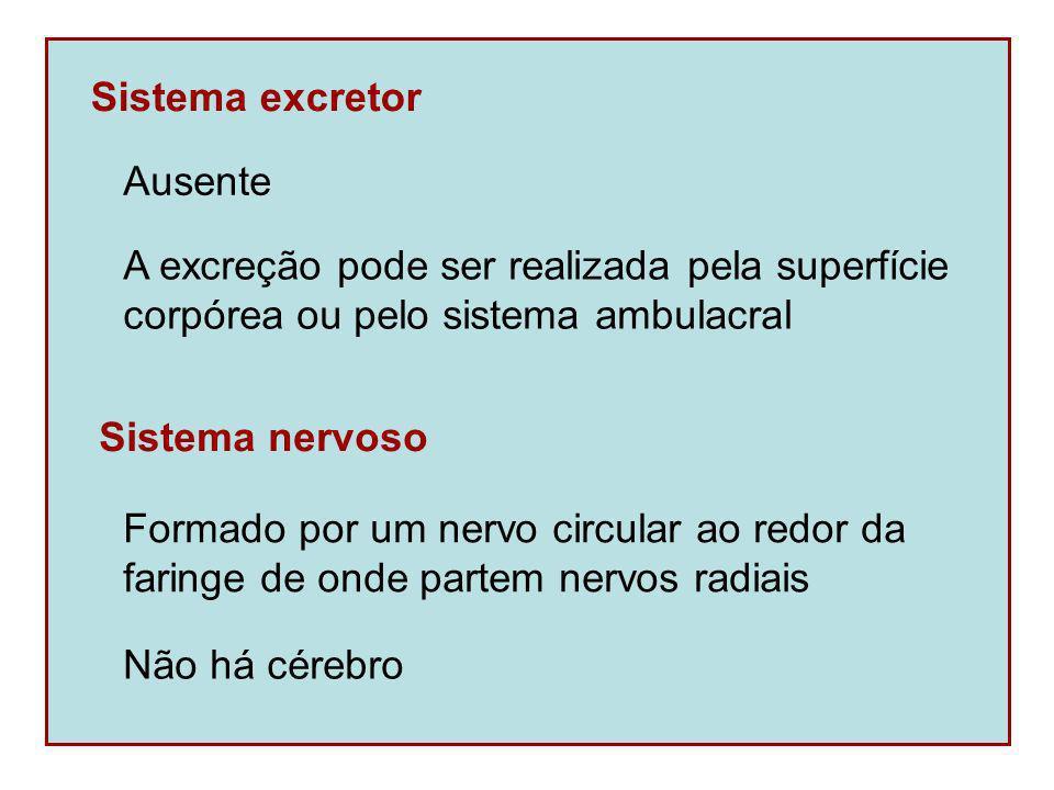 Sistema excretor Ausente. A excreção pode ser realizada pela superfície. corpórea ou pelo sistema ambulacral.