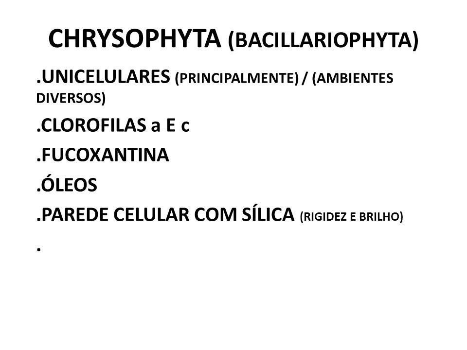 CHRYSOPHYTA (BACILLARIOPHYTA)