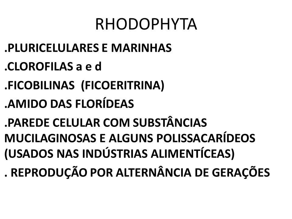 RHODOPHYTA .PLURICELULARES E MARINHAS .CLOROFILAS a e d